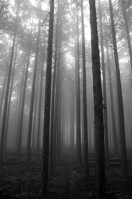 朝霧の森機種:NIKON D70 露出時間:1/30秒 レンズF値:F3.5 露出制御モード:プログラムAE オリジナル撮影日時:2006:03:11 07:16:53 露光補正量:EV0.3 自動露出測光モード:分割測光 フラッシュ:オフ レンズの焦点距離:18.00(mm) レンズの焦点距離(35mm):27(mm)
